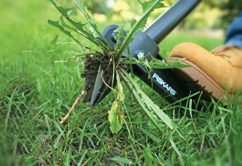 Как бороться с сорняками в саду?