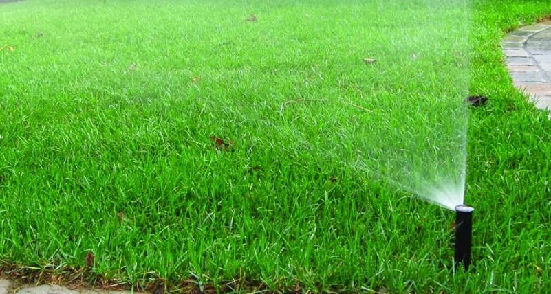 Основные ошибки при поливе газона Как вырастить и сохранить здоровый газон